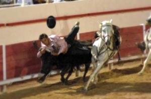 saut de cheval2