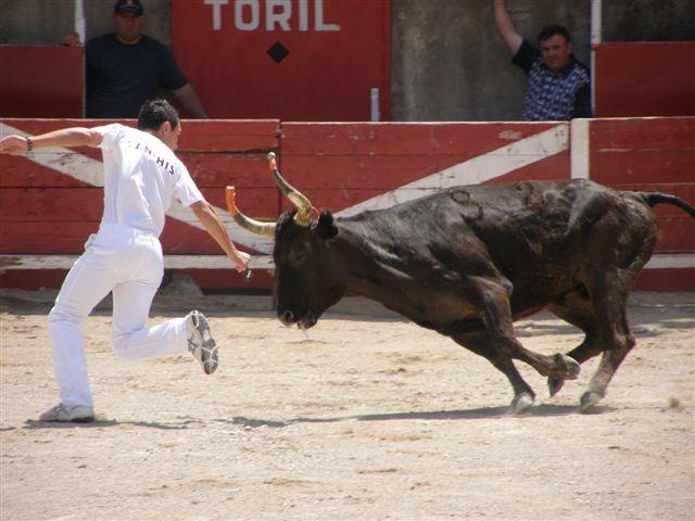 L'homme et le taureau durant la course camarguaise.