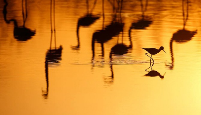 photo-oiseaux-camargue
